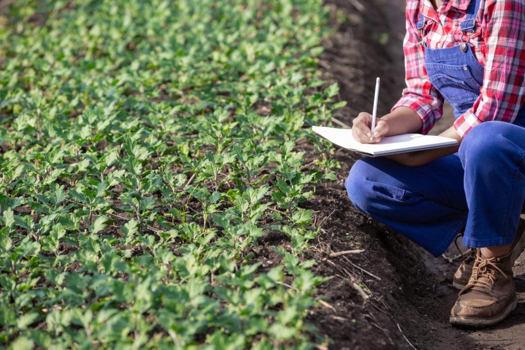 pratique d'agricole urbaine en ville