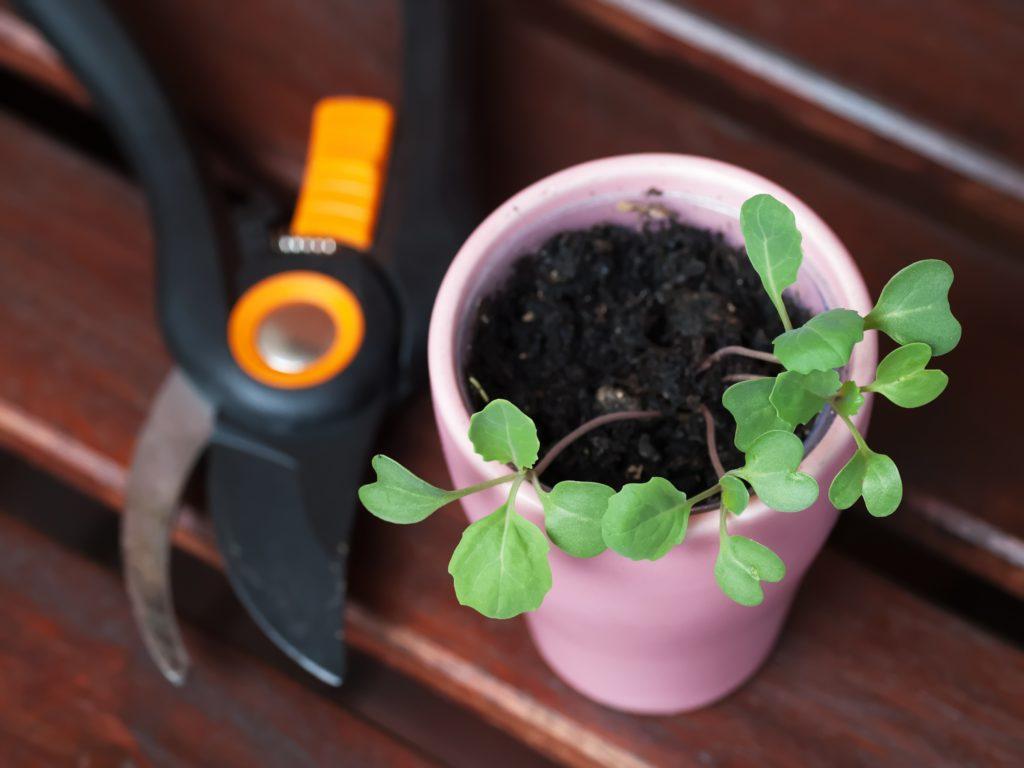 croissance d'une plante au balcon qui envoi a l'agriculture urbaine